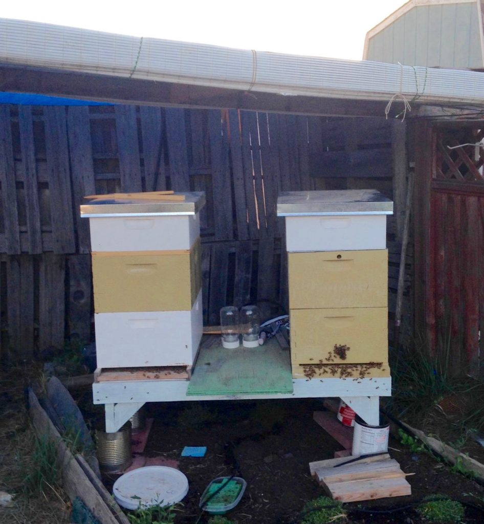 Hive Placement