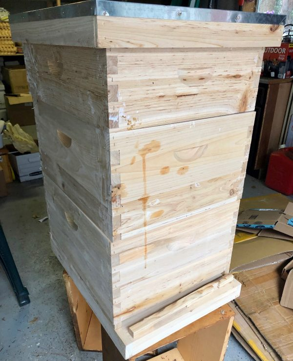 Complete Hive (angle)