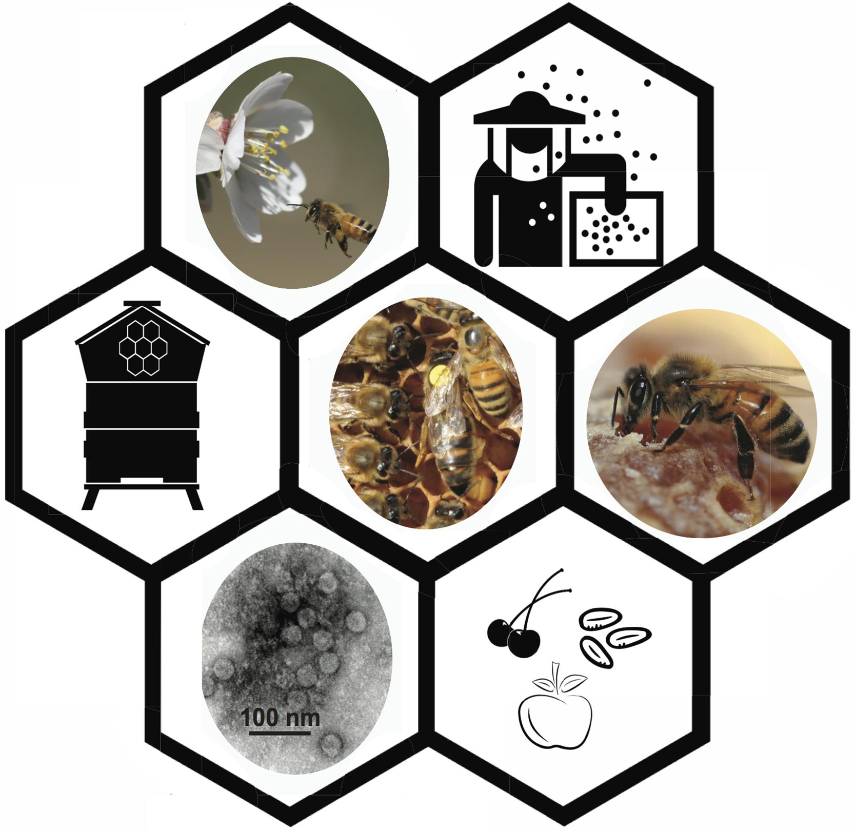 Honey Bee Viruses